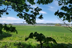 Lindores_Abbey_054